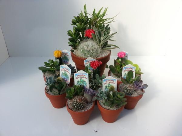 """3"""" Clay & 5"""" Clay& 7"""" Clay Cactus Gardens"""
